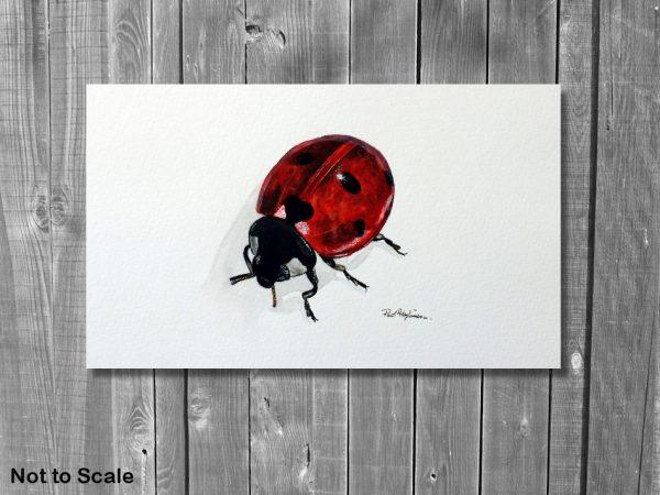 Watercolor wildlife artist Paul Hopkinson ladybug painting displayed
