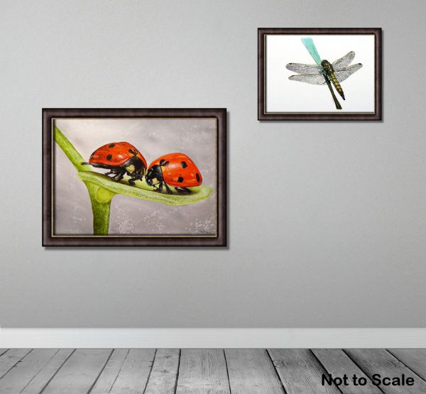 Watercolour ladybird illustration by Paul Hopkinson, framed on a wall
