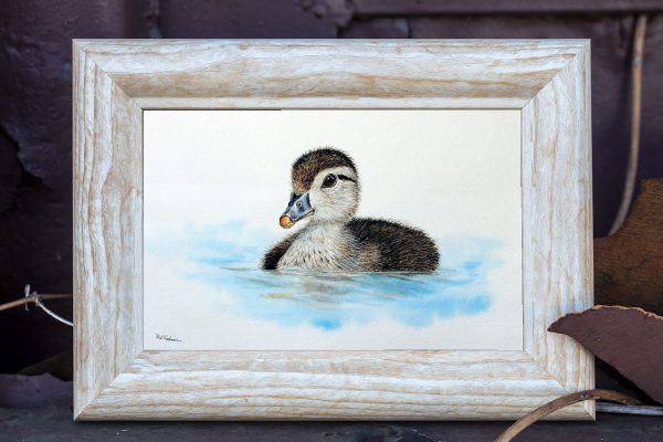 Watercolour painting of a duck by Paul Hopkinson in a rustic frame