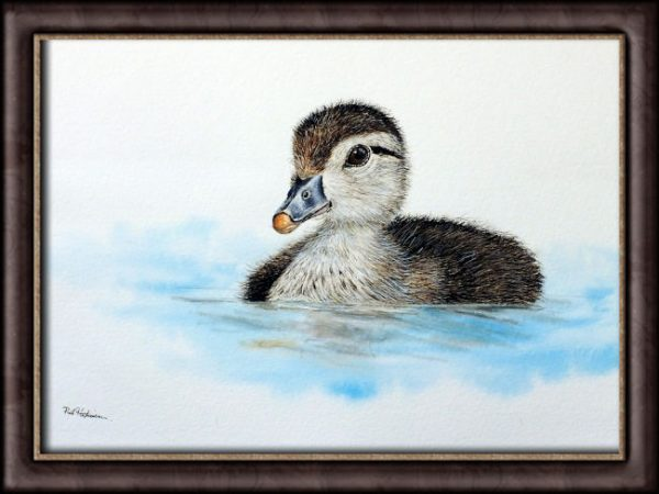 Watercolour painting of a duck by Paul Hopkinson photographed in a frame