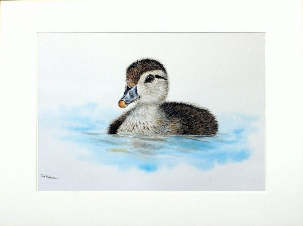 Watercolour painting of a duckling by Paul Hopkinson in neutral mount