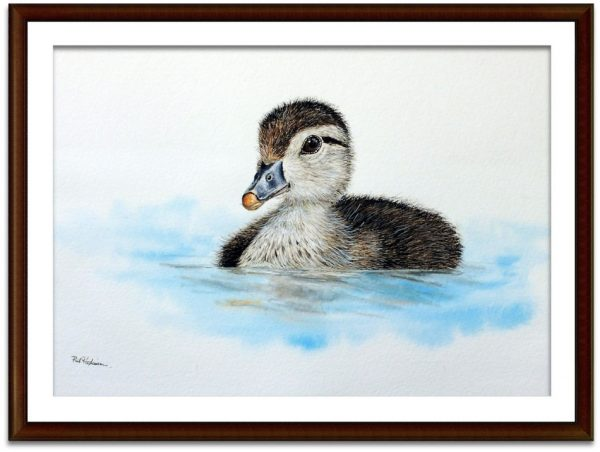 Watercolour painting of a wood duck by Paul Hopkinson mounted and framed