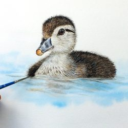 Fine art detail within a wood duckling watercolour painting