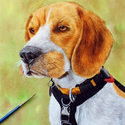 Original watercolour painting of a beagle by Paul Hopkinson