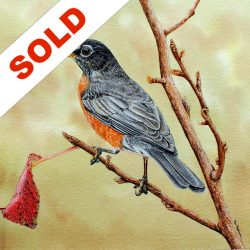 American Robin Watercolor Sold