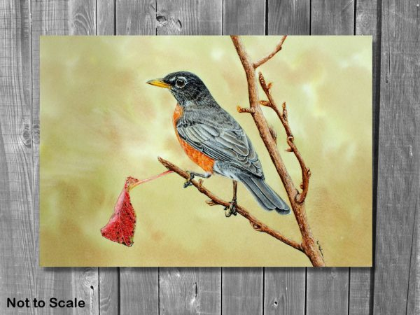 Watercolor painting of an American robin by Paul Hopkinson on a wall