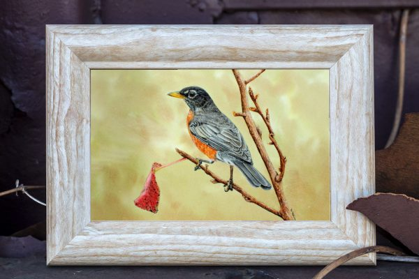 Watercolour painting of an American robin by Paul Hopkinson in a rustic frame