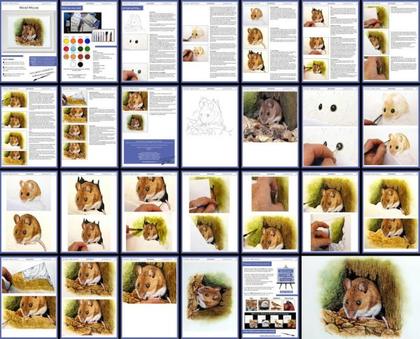 PDF overview image, realistic watercolour wildlife