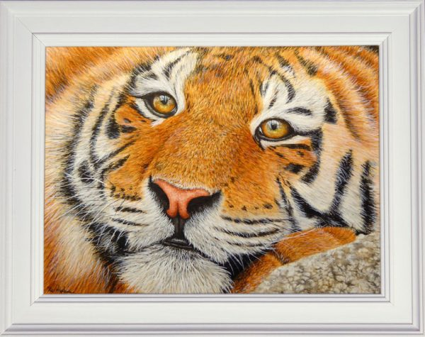 Tiger watercolor painting shown framed
