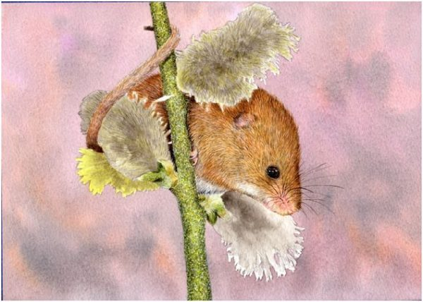 How to paint a mouse in detailed watercolor, stage 3