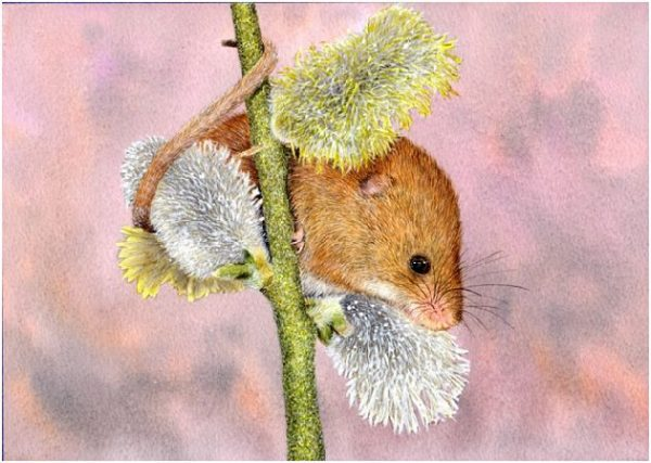 How to paint a mouse in detailed watercolor, stage 4