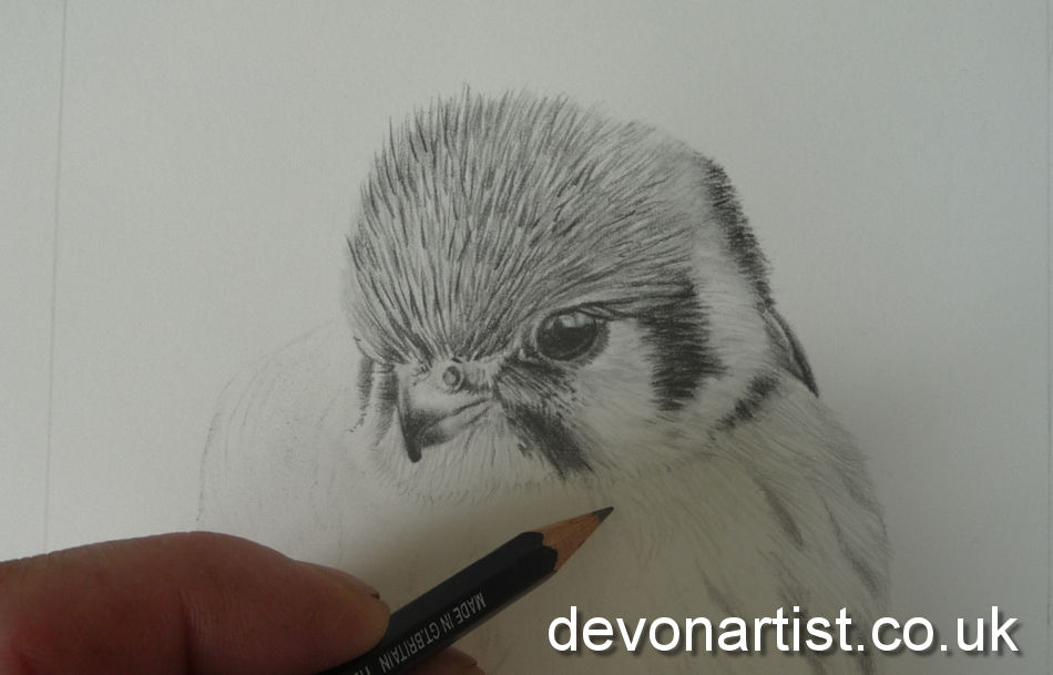 Learning how to draw is important for watercolourists