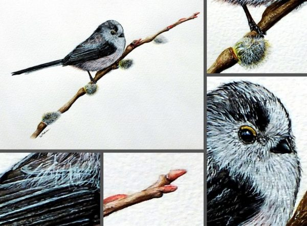 Close up photos of a long tailed tit watercolour painting by Paul Hopkinson