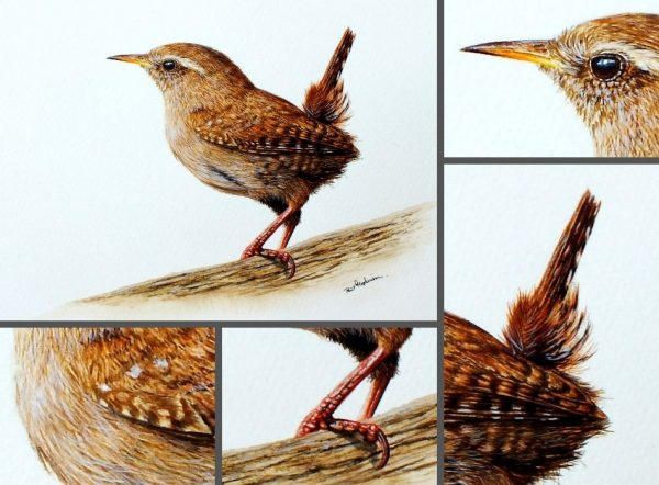 Close up photos of a wren watercolor painting by Paul Hopkinson