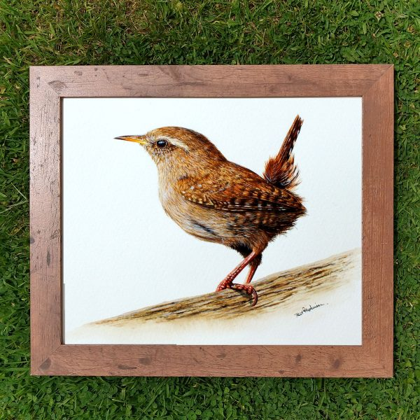 Framed realistic watercolor wren painting by Paul Hopkinson
