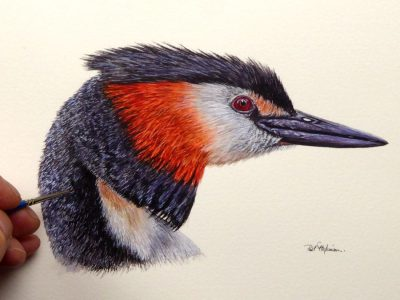 Watercolour painting of a grebe