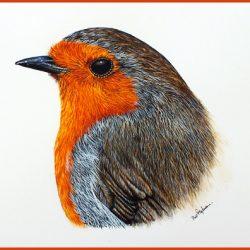 Robin in watercolour by Paul Hopkinson, The Devon Artist