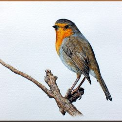 Robin bird painted in detail watercolour by Paul Hopkinson