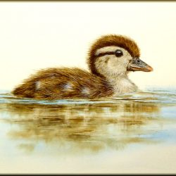 Wood Duckling in watercolour by Paul Hopkinson
