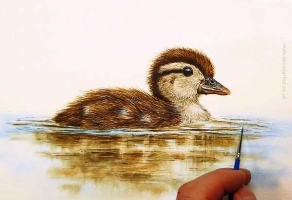 PDF watercolour tutorial on painting a duckling by Paul Hopkinson