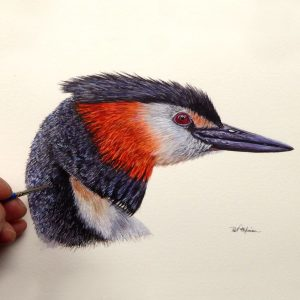 Paul Hopkinson painting a grebe in watercolour