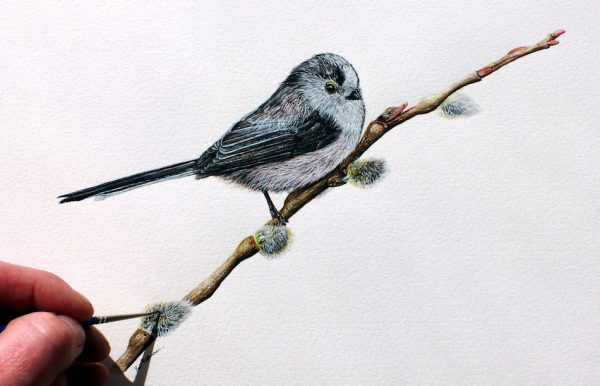 Paul Hopkinson painting a long tailed tit in realistic watercolor