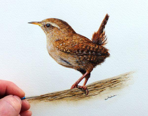 Paul Hopkinson watercolor wren painting