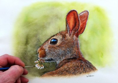 Rabbit in watercolour by The Devon Artist, Paul Hopkinson