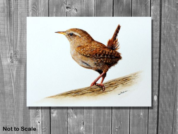 Watercolor wren painting by Paul Hopkinson on a wall