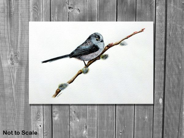 Watercolor painting of a garden bird by Paul Hopkinson on a wall