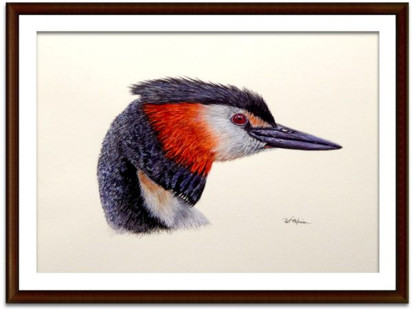 Watercolour painting of a grebe by Paul Hopkinson mounted and framed