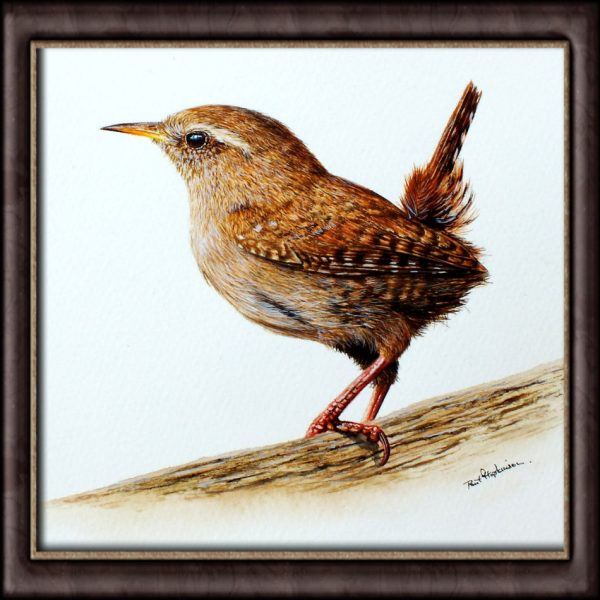 Watercolor painting of a wren by Paul Hopkinson framed