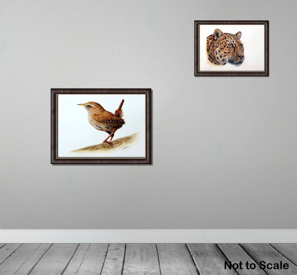 Watercolour painting of a wren by Paul Hopkinson framed on wall