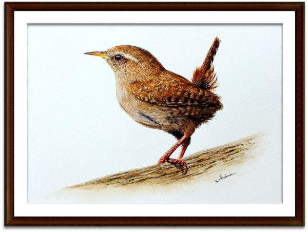 Watercolour painting of a wren by Paul Hopkinson mounted and framed