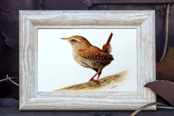 Watercolour painting of a wren by Paul Hopkinson displayed in a rustic frame