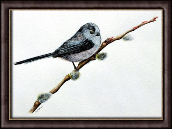 Watercolour painting long tailed tit by Paul Hopkinson framed