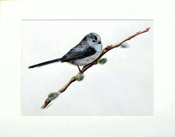 Watercolour painting long tailed tit by Paul Hopkinson in a neutral mount