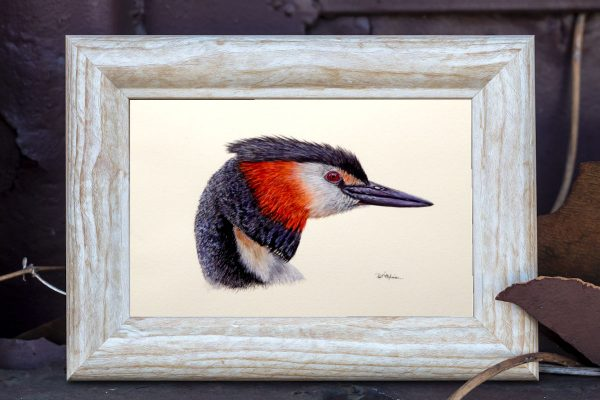 Watercolour painting of a water bird by Paul Hopkinson in a rustic frame