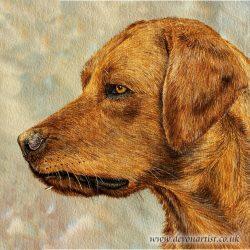 Watercolour portrait of a red fox labrador