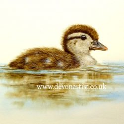 How to paint a wood duckling in watercolour