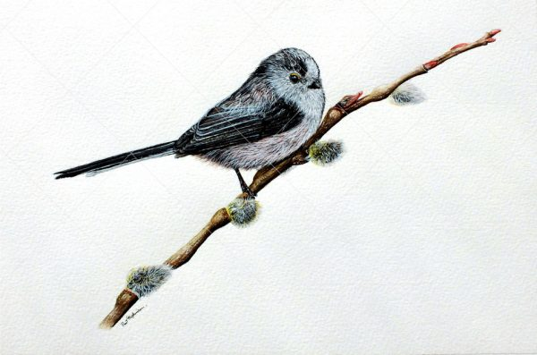 Bird painted in watercolour by Paul Hopkinson