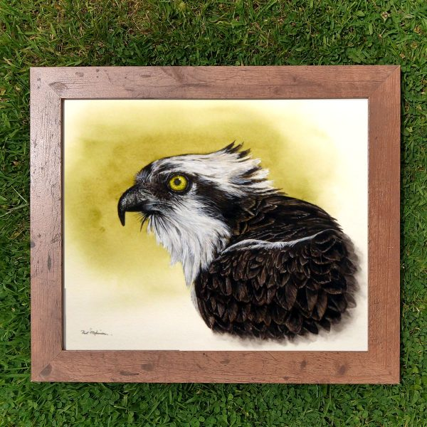 Framed realistic watercolor osprey painting by Paul Hopkinson