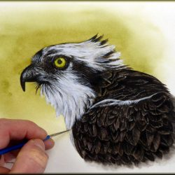 Paul Hopkinson painting an osprey in watercolor