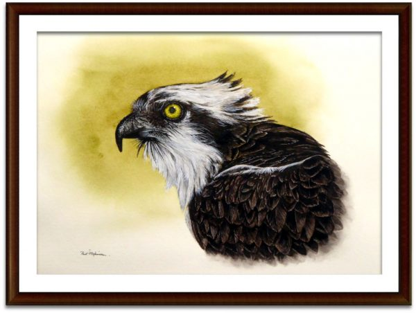 Watercolor painting of an OSprey by Paul Hopkinson, shown mounted and framed
