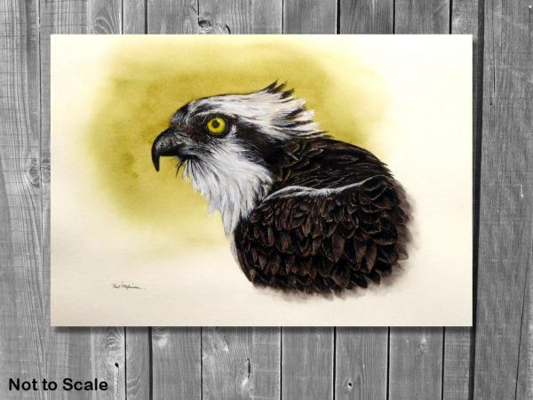 Watercolor painting of an osprey by Paul Hopkinson on a panelled wall