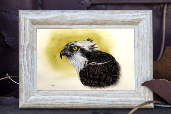 watercolor painting of an osprey by Paul Hopkinson in a rustic frame