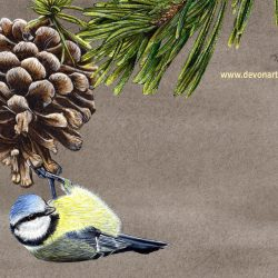 Blue tit watercolour painting by Paul Hopkinson