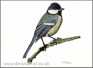 Garden bird watercolour painting by Paul Hopkinson