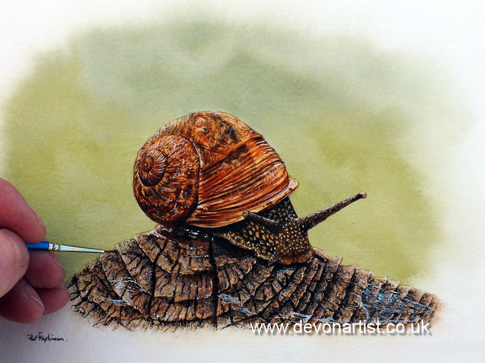Garden snail in watercolour. The shells of snails are often eaten by birds building their calcium levels prior to laying eggs