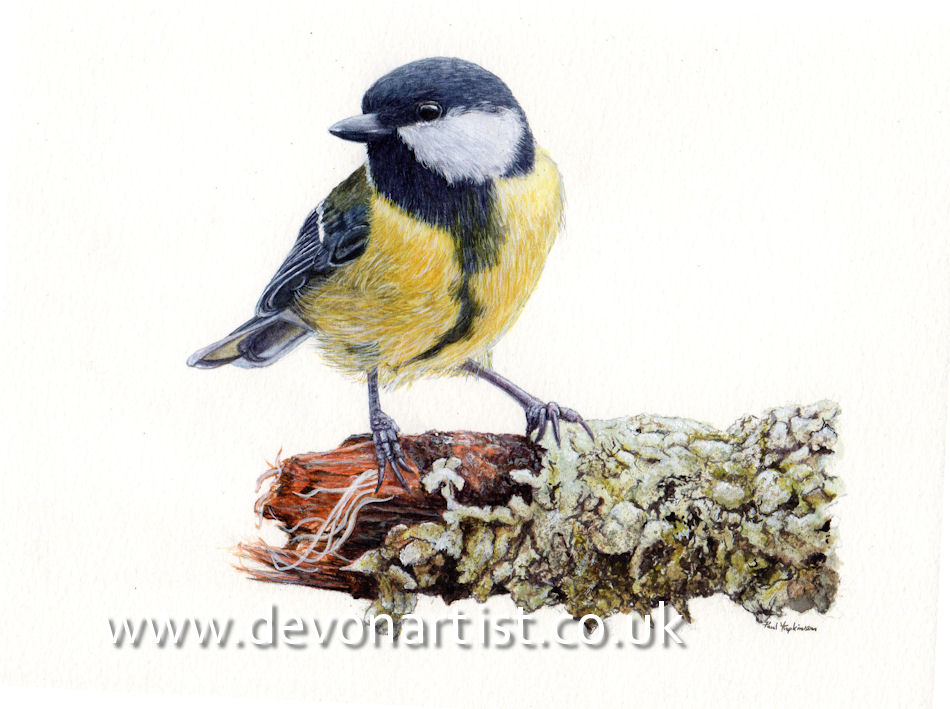 Great Tit in watercolour by Paul Hopkinson